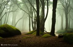 The elf world by Jorge Maia on 500px
