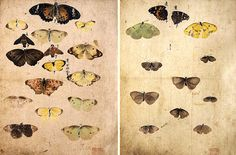 円山応挙2と3 Chinese Art, Japanese Art, Still Life, Watercolour, Butterflies, Vintage World Maps, Dots, Tumblr, Brown