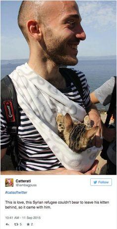 Um refugiado sírio fez a perigosa travessia do mar Mediterrâneo junto deu seu gato, o pequeno Zaytouna. Amarrado em o que parece ser um cachecol, Zaytouna fez a viagem inteira no colo do tutor, e chegou são e salvo na Europa. Segundo informações do Metro.uk, o tutor do gato informou o nome do felino quando chegou em Lesbos, na Grécia. No país, Zaytouna significa 'azeitona' em árabe.