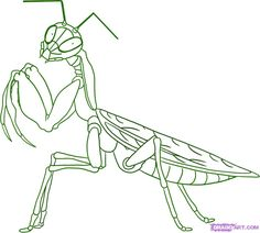 How to Draw a Praying Mantis, Step by Step, Bugs, Animals, FREE Online Drawing Tutorial, Added by Dawn, December 19, 2008, 3:25:46 pm