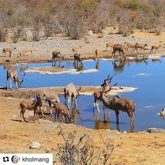 Tørst? #reiseliv #reisetips#reiseblogger #reiseråd  #Repost @kholmang (@get_repost)  Kudus and impalas at Halali waterhole in Etosha National Park #Namibia  August 2015