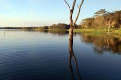 Galho Seco Rio Tiete municipio de Lins - São Paulo