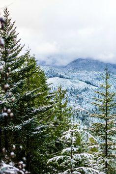 fir trees in the snow // Joy Felicity Jane
