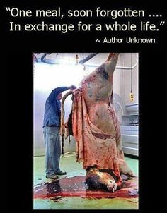 Scroll down if you think that eating meat is ok...