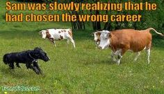 Wrong career? :-)