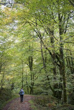 Por los bosques de Asturias