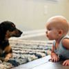 Study: Why Dogs & Cats Make Babies Healthier-What do dogs/cats have to do with your baby's risk of catching colds? According to latest research they may help lower his/her risk of coughs &sniffles during the 1st yr of life. Reporting in the journal Pediatrics, researchers say babies growing up in homes with a pet,namely a dog or a cat, are less likely to get sick than children living pet-free. Results bolster notion that keeping infants' environments overly sanitized isn't good for their…