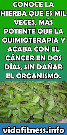 Isabel Hernandez, Home Remedies, Natural Remedies, Medicinal Plants, Health Facts, Natural Medicine, Vegetable Garden, Diabetes, Tips