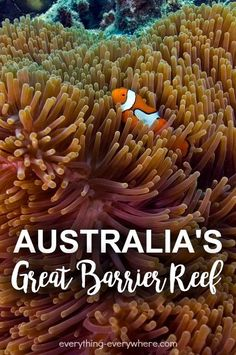 The Great Barrier Reef is a unique site with well-preserved natural beauty and unique features. It is located in the north-east coast of Australia within the state of Queensland. It is known as the largest coral reef system in the world consisting of 400
