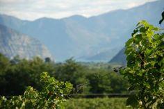 Our vineyard Sottobosco #franciacorta #wine #vino