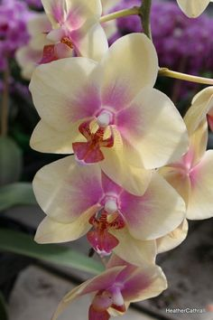 Longwood gardens orchid flower by Heather Cathrall