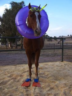 When I was little, my parents said I could be anything I wanted to be. So I became a seahorse. :)