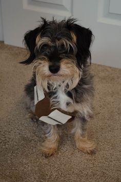Dog Chewbacca Halloween Costume DIY - Naturally Liza Diy Halloween Costumes, Happy Halloween, Chewbacca Halloween, Dogs, Pet Dogs, Doggies