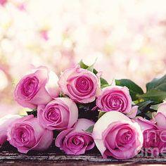 #flowers #pinkroses