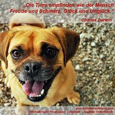 """""""Die Tiere empfinden wie der Mensch  Freude und Schmerz, Glück und Unglück."""" - Charles Darwin"""