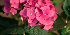 Garden Works, Vegetable Garden, Rose, Flowers, Plants, Gardening, Decoration, Image, Decor