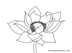 Lotus Flowers Drawings In Pencil Images & Pictures - Becuo
