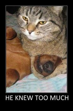 Funny cats and dogs – He knew too much