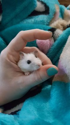 Just hanging out. She loves the snuggle then poke her head up to say hey! #aww #Cutehamsters #hamster #hamstersofpinterest #boopthesnoot #cuddle #fluffy #animals #aww #socute #derp #cute #bestfriend #itssofluffy #rodents
