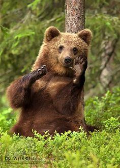 Hello by dgwildlife #animals #animal #pet #pets #animales #animallovers #photooftheday #amazing #picoftheday