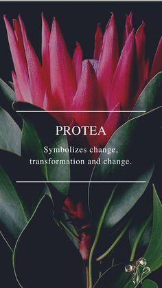 Flower Symbol, Daffodils, Symbols, Flowers, Plants, Plant, Royal Icing Flowers, Flower, Florals