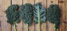 Thirty Ways to Use Kale | Slender Kitchen......some vegan, some need to be veganized.