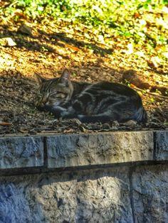 Uykuyu sevmeyen kedi var mı ki? :))