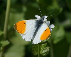 The fluttering of a butterfly's wings can effect climate changes on the other side of the planet.  ~Paul Erlich