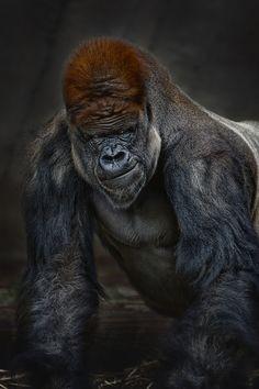 Animal Photography by Jason Armstrong, via Behance
