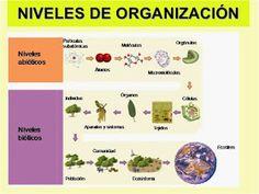 Las Mejores 16 Ideas De Niveles De Organización De Los Seres Vivos Seres Vivos Sistema Complejo Biología