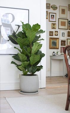 plant stand design ideas for indoor houseplants 13 Interior Plants, Interior And Exterior, Kitchen Interior, Faux Philodendron, Ficus, Plantas Indoor, Common House Plants, Decoration Plante, House Plants Decor