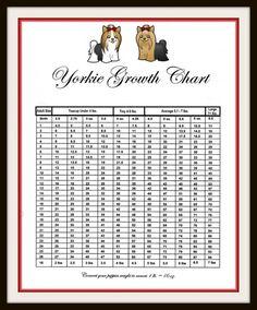 YORKIE GROWTH CHART Yorkie /teacup/toy Pinterest
