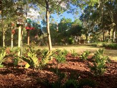 APGD's Song Bird Park in Orlando, FL incorporates Florida native plants such as coontie into a public art installation of bird houses. #apgd