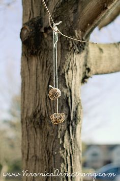 DIY Pine Cone Bird Feeder :: This post includes beautiful photographs! This is a must-try for a craft with the kids.