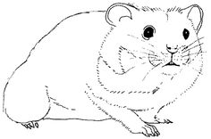 the word gerbil coloring pages | hamster anatomy coloring page | Homeschool Unit Study ...