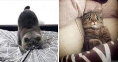 20 обалденных фото, в которых вся суть котов. «Усатые» приколы! Cats, Animals, Gatos, Animales, Animaux, Animal, Cat, Animais, Kitty