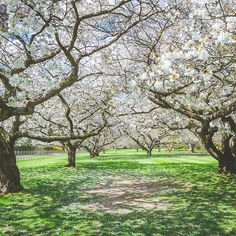 This flowery walkway shot was taken by Sean Bryne one of the photographers we invited to capture Leckford farm and #WaitroseAtSource. Visit Leckfordestate.co.uk to discover more about #WaitroseAtSource