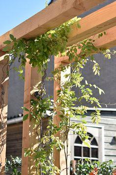 In deze tuin in Schiedam is er gekozen voor een pergola van Douglas hout. Door de blauwe regen te laten groeien over de balken, creëert dit een natuurlijk zonnescherm. Tevens geeft dit ook een mooie bloemenregen. Er zijn verhoogde bloembakken gemaakt in verschillende hoogtes en verschillende kleuren. We hebben deze volledig beplant. Ook hebben wij hier inlite verlichting geplaatst. Er is tevens een leuk zitbankje gemaakt van U-elementen. Garden Inspiration, Garden Ideas, Outdoor, House, Outdoors, Landscaping Ideas, Outdoor Games, Backyard Ideas, The Great Outdoors
