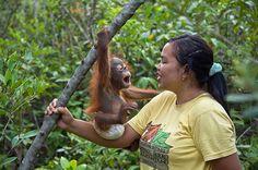 Orangutan orphans: The orphans develop a special bond with their caretakers