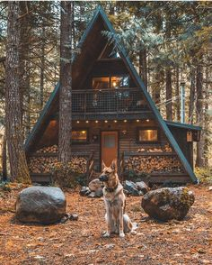 Doggo gaurds the castle of coziness : CozyPlaces