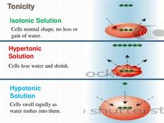 Image result for hypertonic vs hypotonic