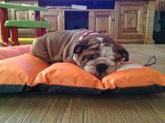 .Napping