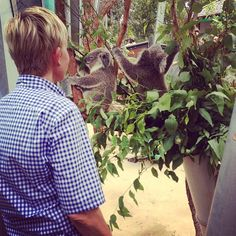 Ellen loves koalas as much as us! #cute #koalaing #australia