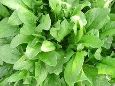 Spinach, Herbs, Vegetables, Natural, Plant, Herb, Vegetable Recipes, Nature, Veggies