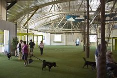 Fido's Indoor Dog Park in Southeast Portland OR Like the indoor tree solution!