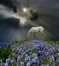 3506 by peter holme iii on 500px