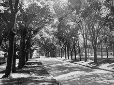 Broadway near Edmonton, Vintage Photos, Canada, Snow, Outdoor, Fun Stuff, 1950s, Broadway, Memories, Art
