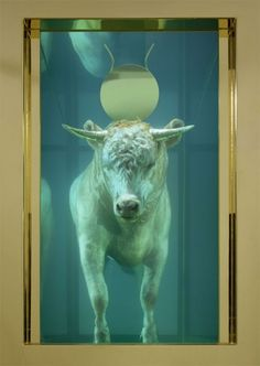 Damien Hirst – 'The Golden Calf' - (detail) Postcard