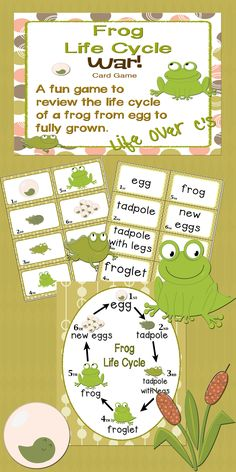 """Sequencing with Frog Life Cycle """"War"""" Card Game Science Center 1st Grade Science, Kindergarten Science, Teaching Science, Science For Kids, Preschool, Frog Activities, School Age Activities, Cycle For Kids, Explanation Writing"""