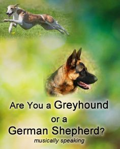 Recognizing your strengths and knowing some techniques or strategies you can use to balance those strengths can help you make your practice more efficient, effective and fun.  Read: Are You a Greyhound or a German Shepherd? (musically speaking) http://harpmastery.com/are-you-a-greyhound-or-a-german-shepherd/  #musician #music #personality